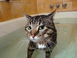 kucing ngomong